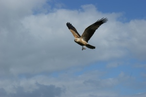 Kingfisher Wildlife