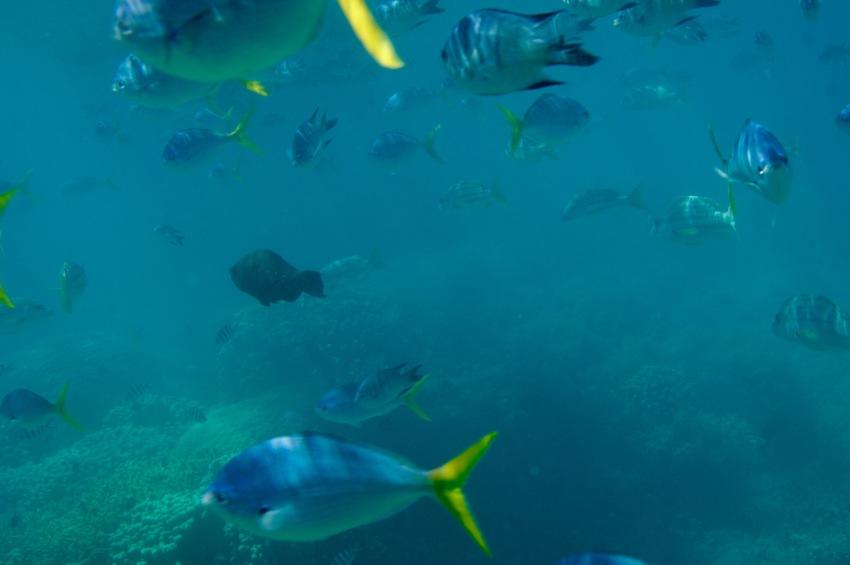Our own aquarium